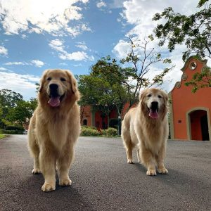 Dogs-refeita