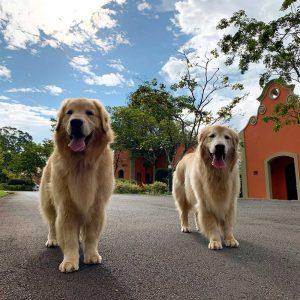 Dogs-refeita